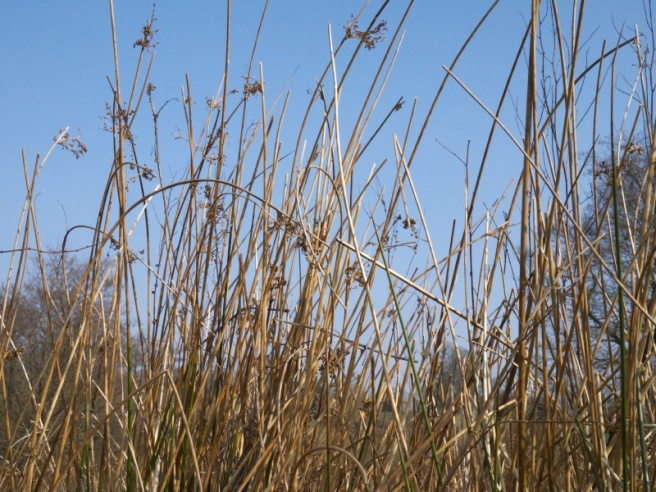 The Sedges and Rushes are a year-round feature