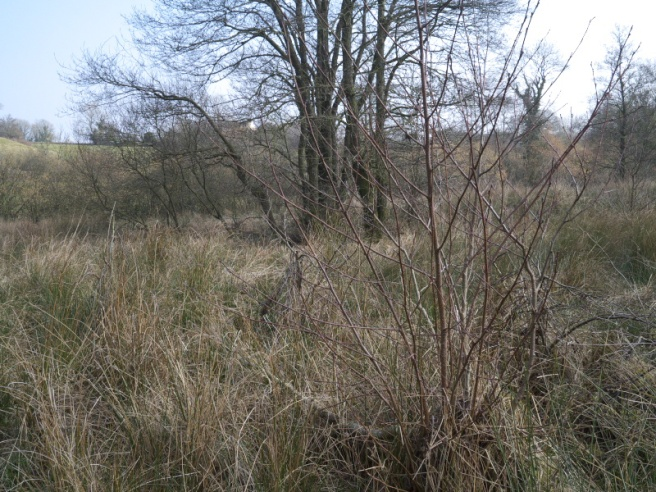 The wetland needs management to prevent it reverting to scrub