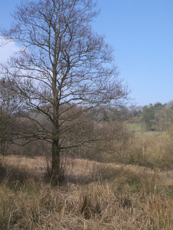 There are a couple of mature trees in the wetland, providing ideal perches for Raptors hunting in the Sedges